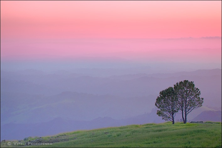 Two Trees on a Hill at Sunset