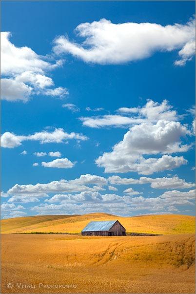 Barn in a Rye Field