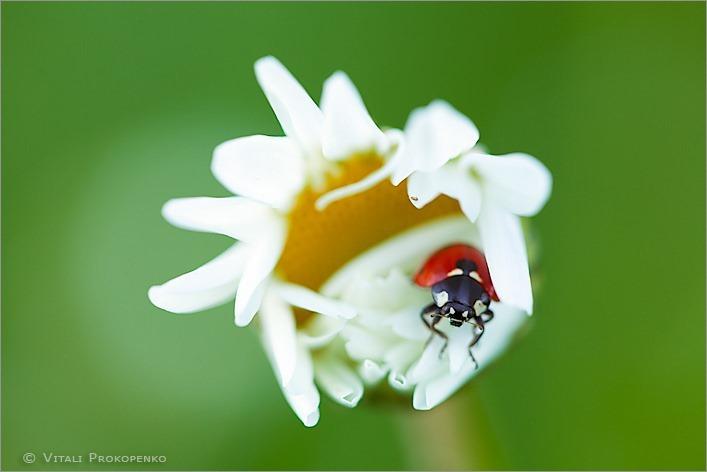 Good Night, Ladybug