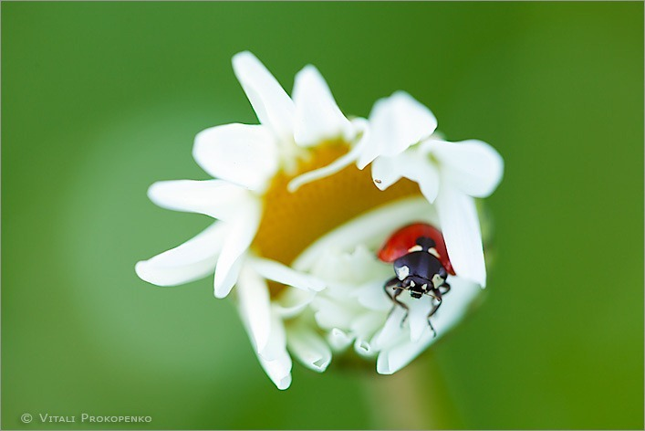 Good Night, Ladybug